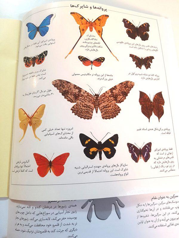 کتاب علمی حشرات
